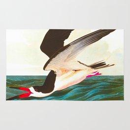 Black Skimmer or Shearwater Bird Rug