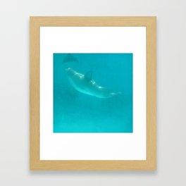 Checking out some flukes Framed Art Print