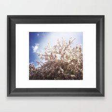 Blossoms in Spring Framed Art Print
