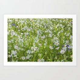 Wild Woodland Anenomes Art Print