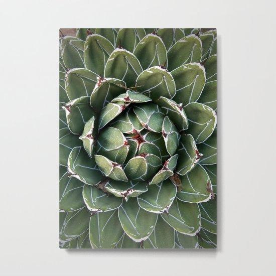 Large Succulent with Tiny Slug Metal Print