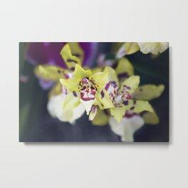 Longwood Gardens Orchid Extravaganza 74 Metal Print