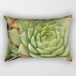 Hens and Chicks Plant Rectangular Pillow