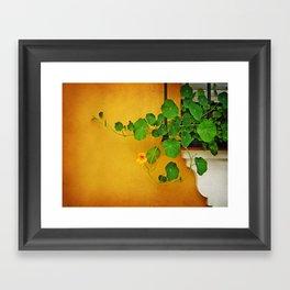 Window Box Framed Art Print