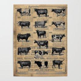 Vintage 1896 Cows Study on Antique Lancaster County Almanac Poster