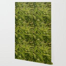Longwood Gardens Autumn Series 407 Wallpaper