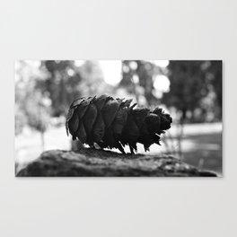 Northwest pinecone  Canvas Print