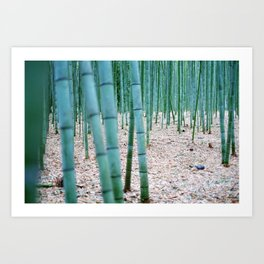 The Bamboo Grove, Arashiyama, Kyoto Art Print