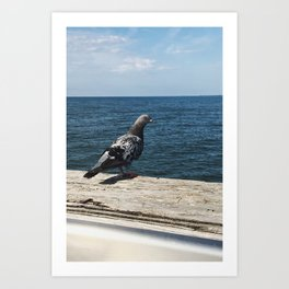 Pigeon on the Water Art Print