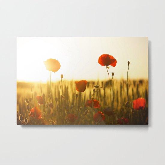 Poppies in the Sun Metal Print