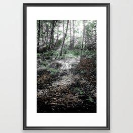 FOREST IN AUSTRALIA Framed Art Print