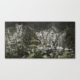A WEB ON A BUSH Canvas Print