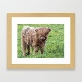 Baby highland cow Framed Art Print