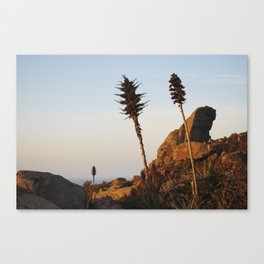 Sisters In Earth Canvas Print