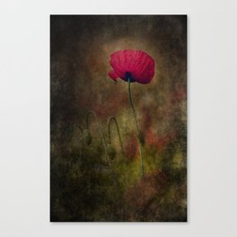 Poppy Shining through the Dark Canvas Print