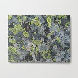 Lichens Metal Print