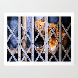 Sleepy street cat Art Print