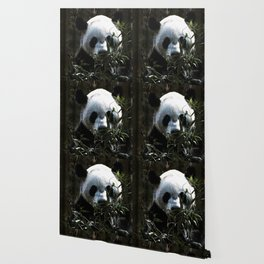 Chinese Giant Panda Bear Wallpaper