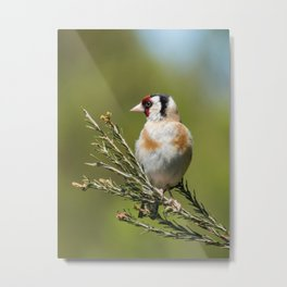Goldfinch Metal Print