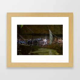 caiman crocodile Framed Art Print