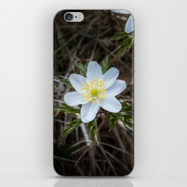 One beautiful little wood anemone outdoors from above iPhone Skin