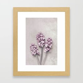 Beautiful Pink Hyacinths Framed Art Print