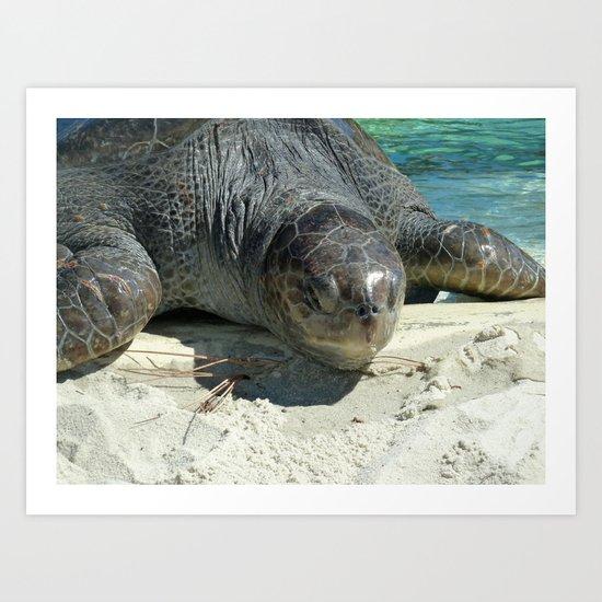 Turtle Ashore Art Print