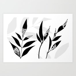 Shadow Play #2 Nature's Best Art Print
