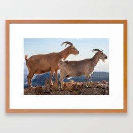 Two goats full portrait 7639 Framed Art Print