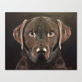 Classic Chocolate Labrador Canvas Print