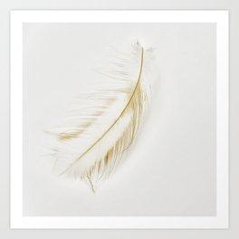Feather Light Art Print