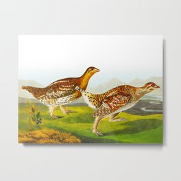 Sharp-tailed Grouse Bird Metal Print