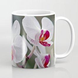 Phalaenopsis Orchid Coffee Mug