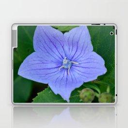 Platycodon Grandiflorus aka. Ballon Flower Laptop & iPad Skin