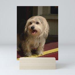 Storefront Dog Mini Art Print