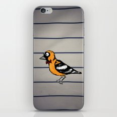 oriole iPhone & iPod Skin