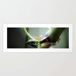 Fire Ants Art Print