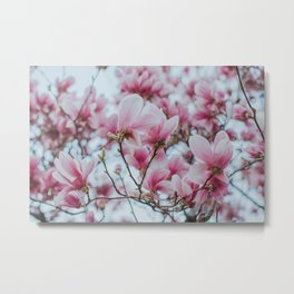 Sweet Cotton Magnolias Metal Print