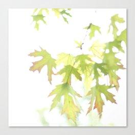 Soft Maple Leaves Canvas Print