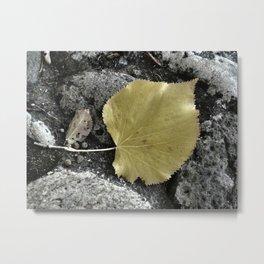 Leaf... Metal Print