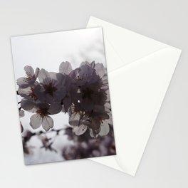 Sunstruck Stationery Cards