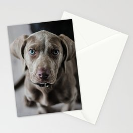 Weimaraner puppy looking sweet Stationery Cards