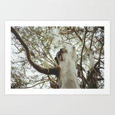 San Francisco Tree Art Print
