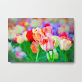 Beautiful Fresh Tulip Flowers On A Flowerbed Metal Print