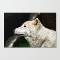 Arctic White Wolf Canvas Print
