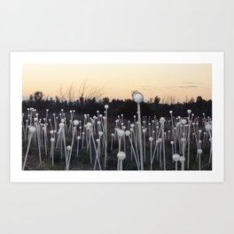 Dawn Breaks on Field of Light Art Print