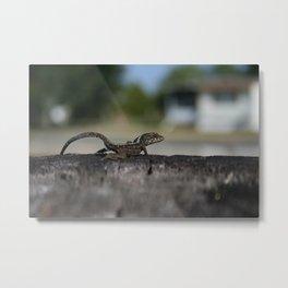 A Ready Lizard DPG161120a Metal Print