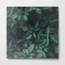 Forest Vines Metal Print