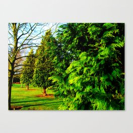 Evergreens Canvas Print