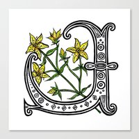 marc johns Canvas Prints featuring St Johns Wort by amyrose